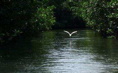 Galerie Oiseaux - Bahia Tenacatita