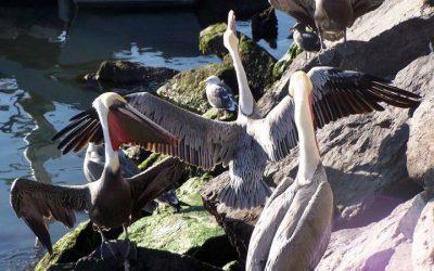 Galerie Oiseaux - Ensenada 3