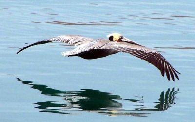 Galerie Oiseaux - Isla Espiritu Santo Punta Colorado
