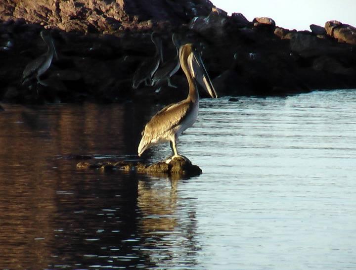 Oiseaux - Isla la Ventana