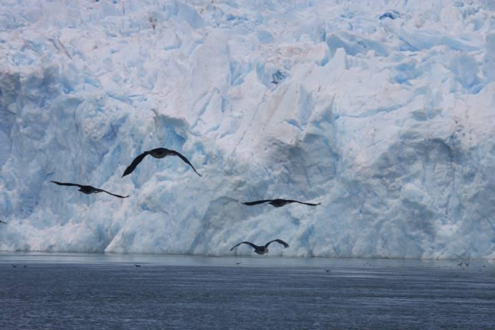 Oiseaux - Laguna San Raphael