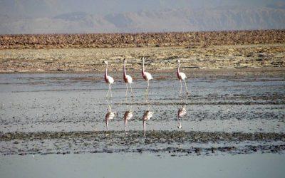 Galerie Oiseaux - Laguna Salar 2